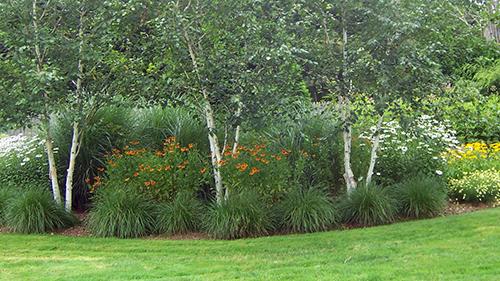 Pruning, Transplanting & Removal
